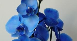 significato-dei-fiori-orchidea_NCG4